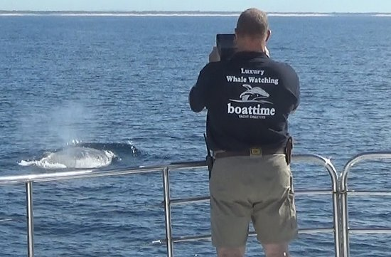 Super Yacht Whale Watching: Another photo opportunity.