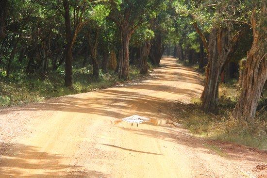 Saliyapura, Sri Lanca: Wilpattu Safari - Sri Lanka