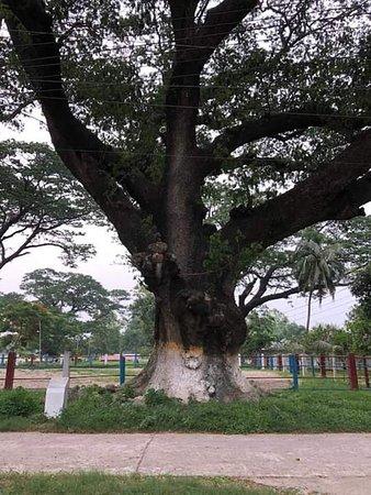 Sardah, Rajshahi