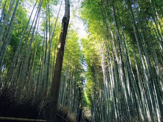 嵐山 Bamboo Grove