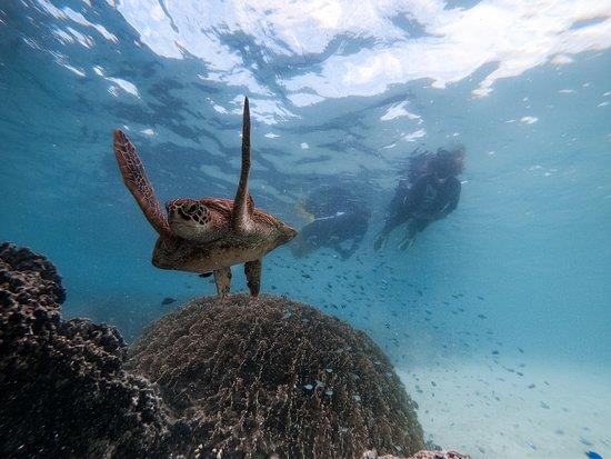 Snorkel Cook Islands