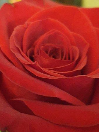 Наш чайный стол сервирован вареньем клубничным с лепестками роз , умопомрачительный аромат и вкус ждёт наших гостей 🌹🌹🌹🌹🌹🌹🌹