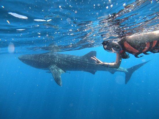 Puro Kitesurf Mexico : Snorkeling with whale sharks