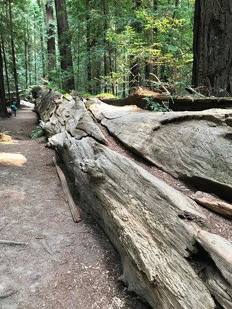 Founder's Grove Nature Trail