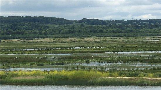 RSPB St Aidan's nature park: View 3 loads of Birds