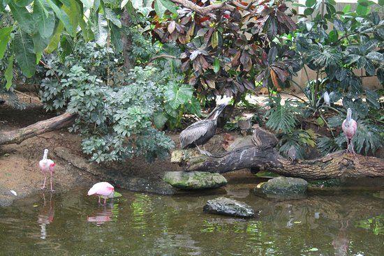 The wetlands room with cranes, flamingos, scarlet Ibis, and more