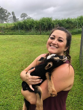 There were tears! These little guys brought us so much joy. And the property owners were so kind. Oh and the cheese and caramels.... AMAZING!!! Must stop on your way to Akaka falls, or go out of your way to cuddle with the goats (for free) and eat the cheese!