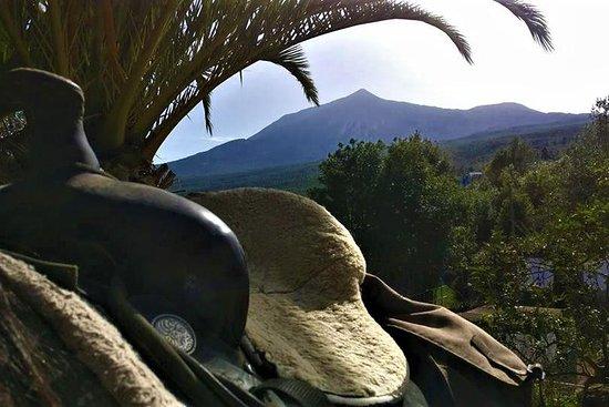 Finca Estrella - Ausritte und Wanderreiten im Norden von Teneriffa