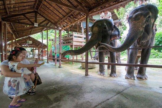 Enjoy Elephant Feeding & Riding Experience only at A'FAMOSA SAFARI WONDERLAND