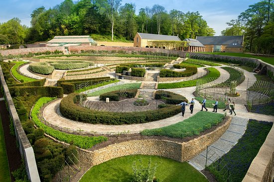 Bruton, UK: Chefs on a picking trip through the Apple Parabola Maze