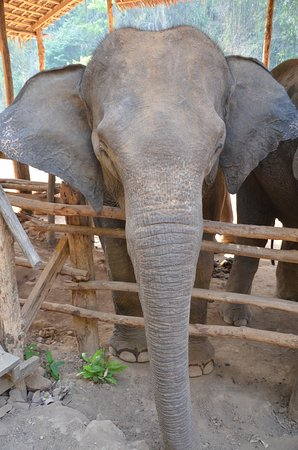 Elephants were walking free in their compound
