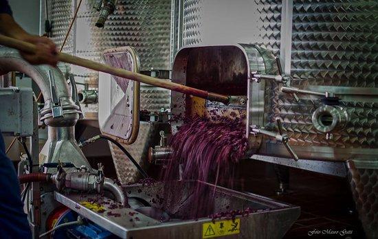 Lavorazione delle uve