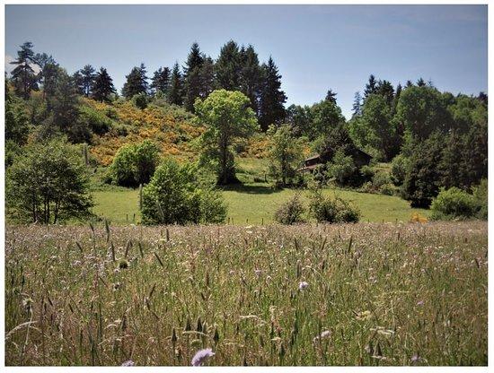 Saint-Julien-d'Ance, ฝรั่งเศส: Superbe randonnée en suivant l'Ance, rivière à truite, jusqu'au petit village de Pontempeyrat. Le sentier descend du hameau de Theux, jusqu'au fond du vallon à travers bois et prairies fleuries. Magnifique