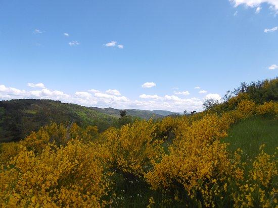 Saint-Julien-d'Ance, ฝรั่งเศส: Balade autour du petit hameau de Pilhac, à la saison des genêts. Odeurs et couleurs, avec au fond les monts de la  Madeleine.