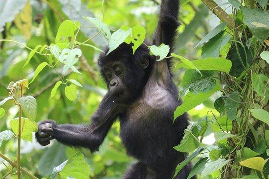 Rwanda Travel Safaris