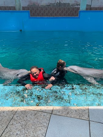 Swimming with dolphins and their trainer in Havana