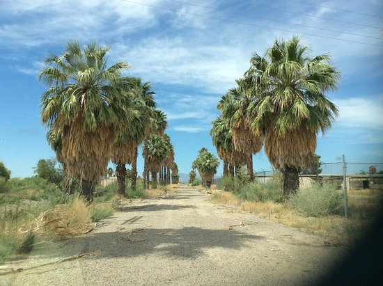 The rows of palm trees are among the first things you will see as you approach Poston Camp 1.