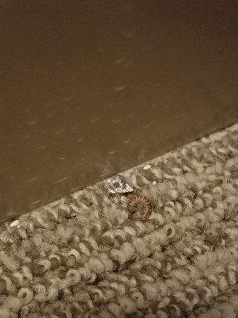 Home2 Suites by Hilton Murfreesboro: Dead centipede against the wall near closet.
