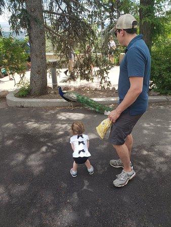 Fun zoo for families!