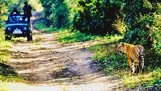 Jim Corbett National Park, Indie: #Private_Tour : #Jim_Corbett_Nainital_Tour  Duration :- 03 Nights / 04 Days  Destination Covered :- Ramnagar , Jim Corbett , Nainital  More information Visit our website :-  http://www.getsholidayindiatour.com/  Book your tour at : Email id :- getsholidayindiatour@gmail.com call us at :- +91 8532003202 , +91 9837339700
