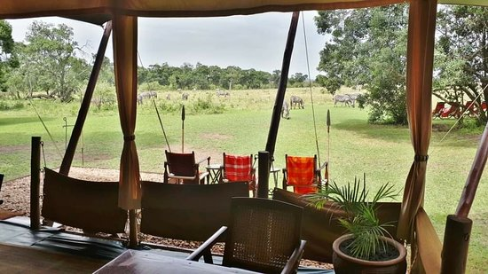 Reserva Nacional Masai Mara, Quénia: Elephant peeper camp masai mara. Are you ready for a migration safari? Contact me for more details.