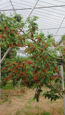 Konno Fruits Gaden