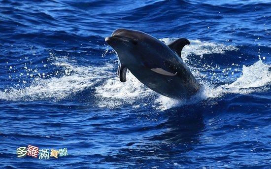 夏天到了!! 計畫跟鯨豚來個涼爽的約會了嗎?www.turumoan.com.tw