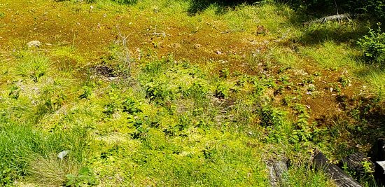 Durbin and Greenbrier Valley Railroad: Cheat mountain Salamander