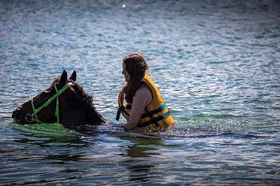 Maritim Equestrian Centre: Pferdeschwimmen