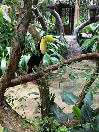 The Springs Resort and Spa: Club Rio wildlife reserve tour