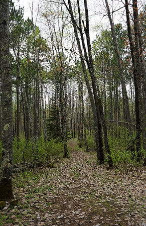 Side Lake, MN: Great forested trails