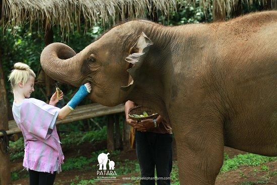 Patara Elephant Farm - Private Tours: Letting the elephant get to know you. Hand feeding.