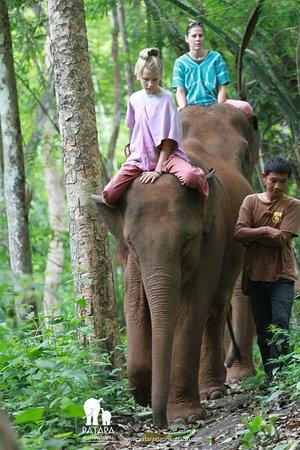 Patara Elephant Farm - Private Tours: Bareback ride through the forest
