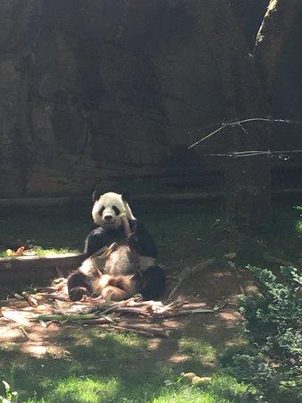 Zoo Atlanta Admission Ticket: Nothing greater than seeing Giant Pandas!