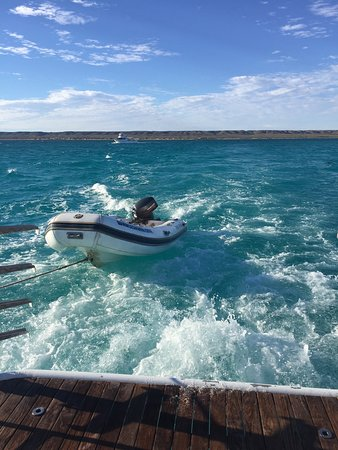 Ningaloo Whaleshark n Dive: Heading to outer reef to find some whale sharks