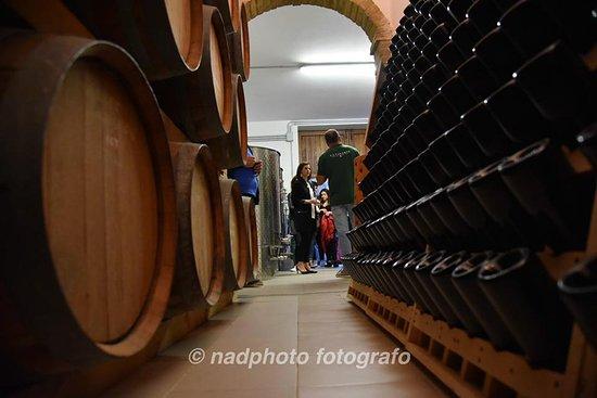 La Vinarte Azienda Agricola