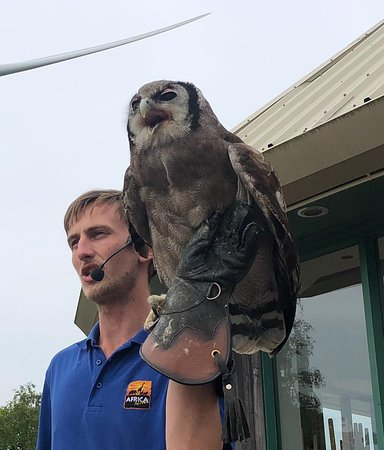 Owls taking part in the live demonstration.