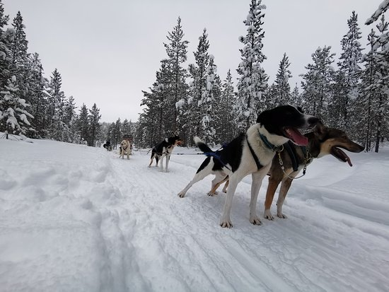 Maglelin Experience: winter wonderland