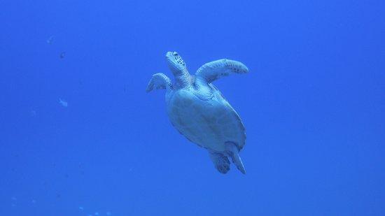 Bubble Diving Center: Equipe au top, matériel neuf. Ambiance idéal.  En un mot, que du BONHEUR !!