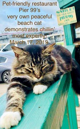 Pier 99: Mellow meow, Pet-friendly good seafood Pier99 restaurant resident fur-fellow.