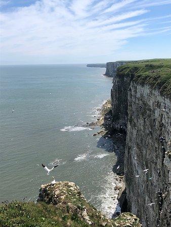 RSPB Bempton Cliffs: Bempton Cliffs - where the busy birds are spell-binding