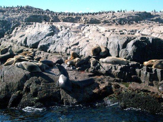 Isla de Los Pajaros: ISLA DE LOS PÁJAROS