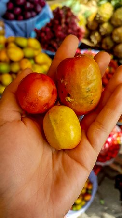 Гватемала: Jocote is a Mesoamerican fruit.    The best-known varieties of jocote in Guatemala are Corona, Tronador.  You can eat them when they are ripe, can be used to make sweets (jocotes in honey), ice cream, or as a basis for making fermented beverages (cusha or chicha), they can also be used to make vinegar.