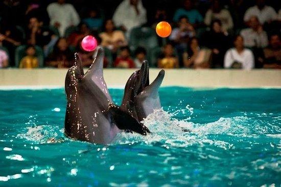 Dolphinarium Ticket Dubai (Dolphin Show)
