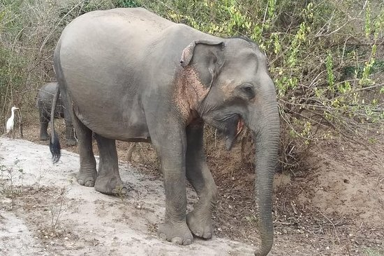 Chitwan National Park Wildlife Tour