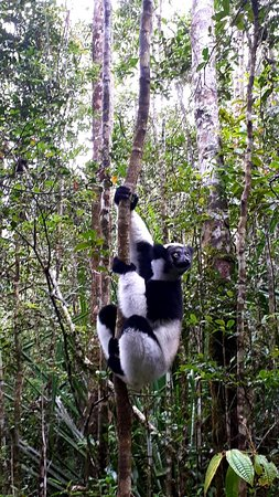 Andasibe-Mantadia National Park  (Reserve of Perinet)