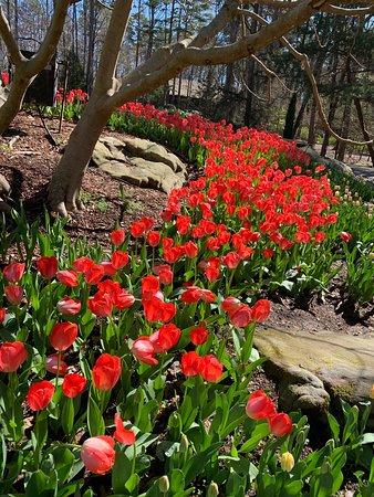 Gorgeous - Picture of Garvan Woodland Gardens, Hot Springs - TripAdvisor