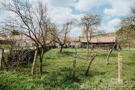 Stejarisu, رومانيا: A Garden
