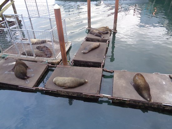 Newport's Historic Bayfront: Sea Lions lounging below the dock.