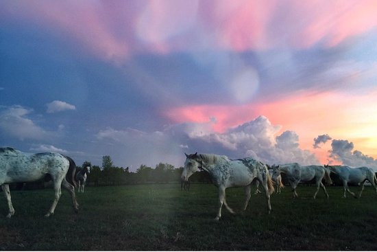 Megson Farms